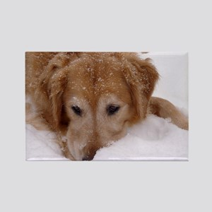 Winter Golden Retriever Rectangle Magnet