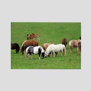 Mini Colts Playing In Field Rectangle Magnet