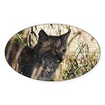 Bobcat in Brush Oval Sticker