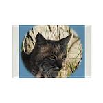 Bobcat in Brush Rectangle Magnet (100 pack)