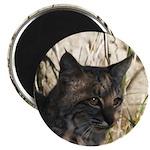 Bobcat in Brush Magnet