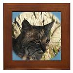 Bobcat in Brush Framed Tile
