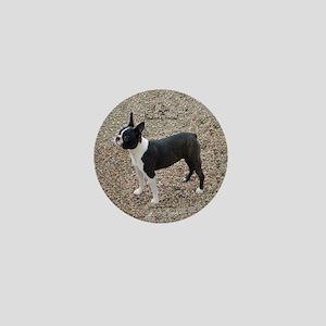 Boston Terrier Pup2 Mini Button