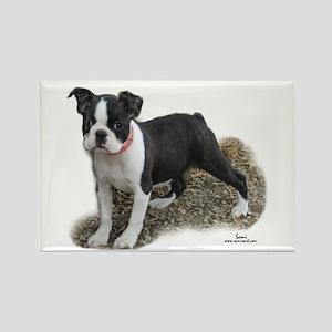 Boston Terrier Pup 1 Rectangle Magnet