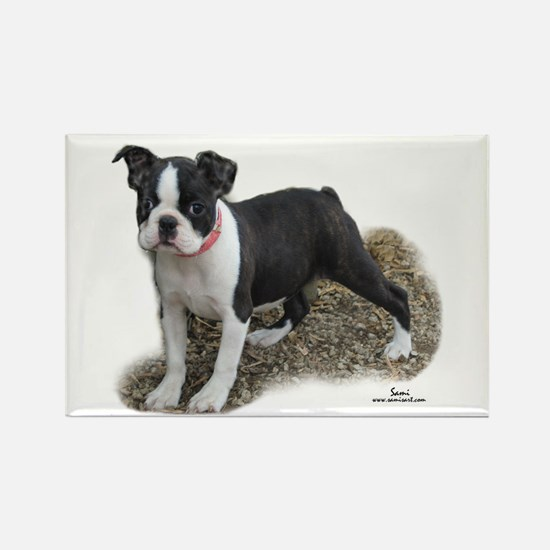 Boston Terrier Pup 1 Rectangle Magnet