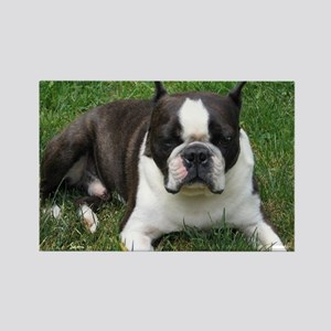 Chip the Boston Terrier Rectangle Magnet