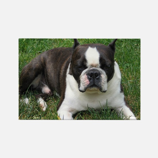 Chip the Boston Terrier Rectangle Magnet