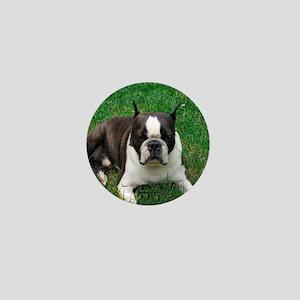 Chip the Boston Terrier Mini Button