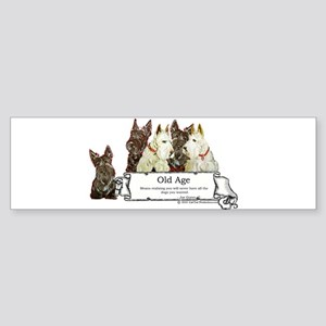 Old Age Scottish Terriers Bumper Sticker