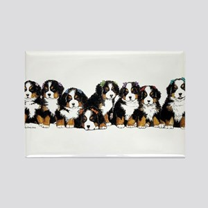 Bernese Mountain Dogs Magnets