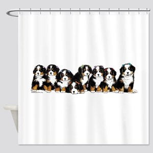 Bernese Mountain Dogs Shower Curtain