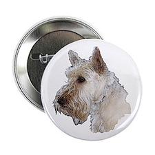 Scottish Terrier (Wheaten) 2.25