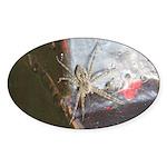 Wolf Spider Oval Sticker