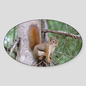 Red Squirrel II Oval Sticker
