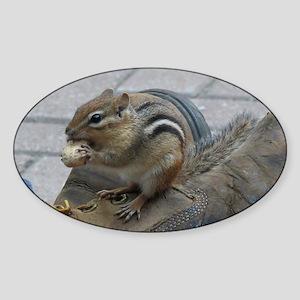 Chipmunk Sticker II (Oval)