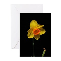 Daffodil on Black Cards (Pk of 10)
