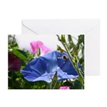 Honeybee and Morning Glories Cards (Pk of 10)