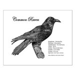 Common Raven - Small Poster