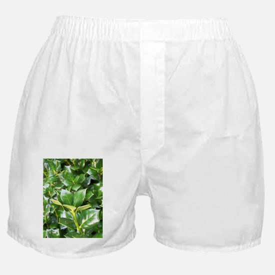 Holly 55 Boxer Shorts