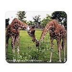 Giraffes Feeding - Mousepad