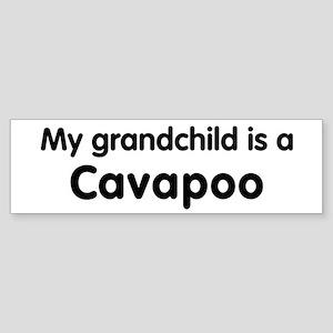 Cavapoo grandchild Bumper Sticker