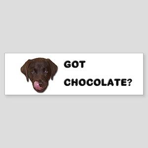 Got Chocolate Labrador? Bumper Sticker