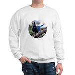Steller's Jay Hollering Sweatshirt