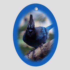 Steller's Jay Hollering Oval Ornament