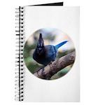 Steller's Jay Hollering Journal