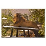 Lion on a Car Large Poster