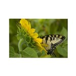 Butterfly and Sunflower Rectangle Magnet