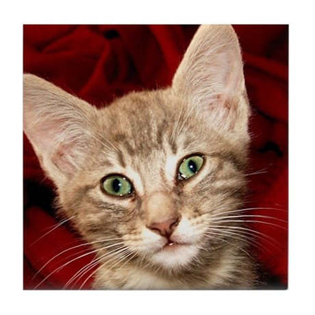 Grey Tabby Kitten Tile Coaster