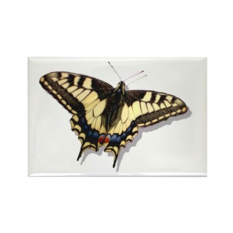Tiger Swallowtail Butterfly Rectangle Magnet