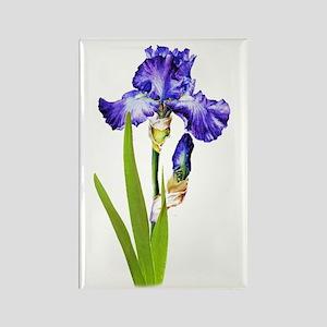 Purple Iris Rectangle Magnet