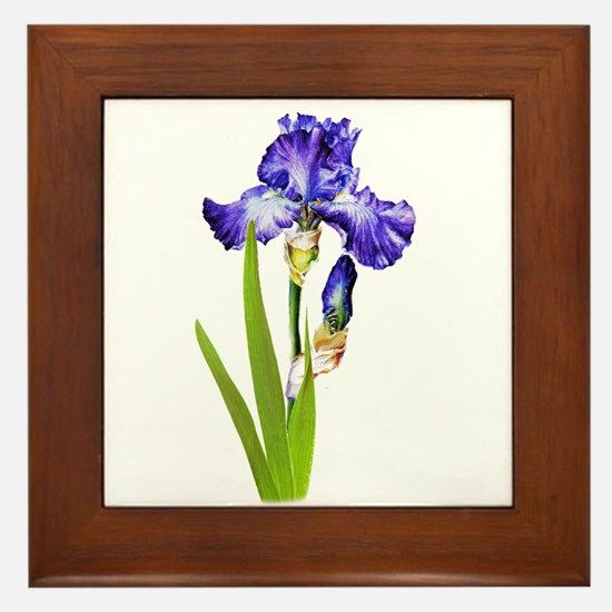 Purple Iris Framed Tile