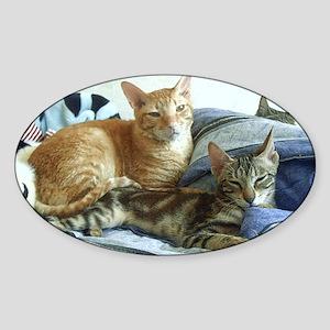 Cornish Rex & Sokoke Kitten Oval Sticker