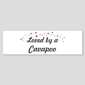 Loved By Cavapoo Bumper Sticker