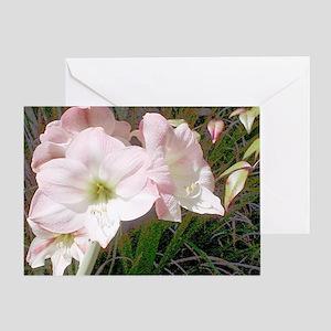 Good Morning Amaryllis Greeting Card