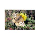Butterfly on Flower Rectangle Magnet (100 pack)