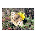Butterfly on Flower Postcards (Package of 8)
