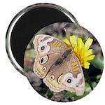 Butterfly on Flower Magnet