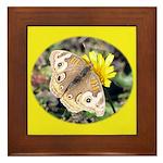 Butterfly on Flower Framed Tile
