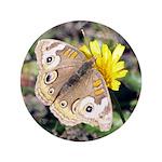 Butterfly on Flower 3.5