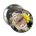 Butterfly on Flower 2.25