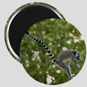 Lemur Jump Magnet