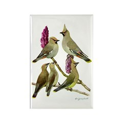 Fuertes' Waxwings Rectangle Magnet