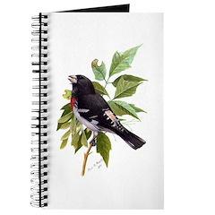 Rose-breasted Grosbeak Journal
