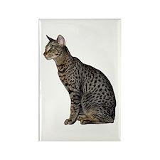 Savannah Cat Rectangle Magnet