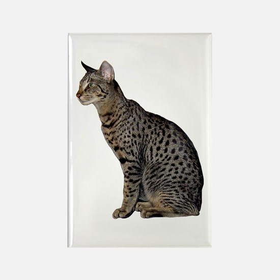 Savannah Cat Rectangle Magnet
