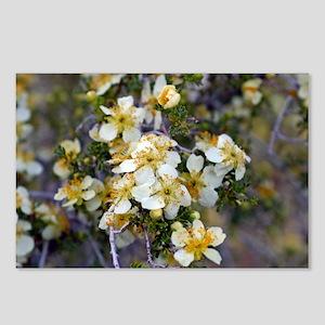 Desert Blooms Postcards (Package of 8)
